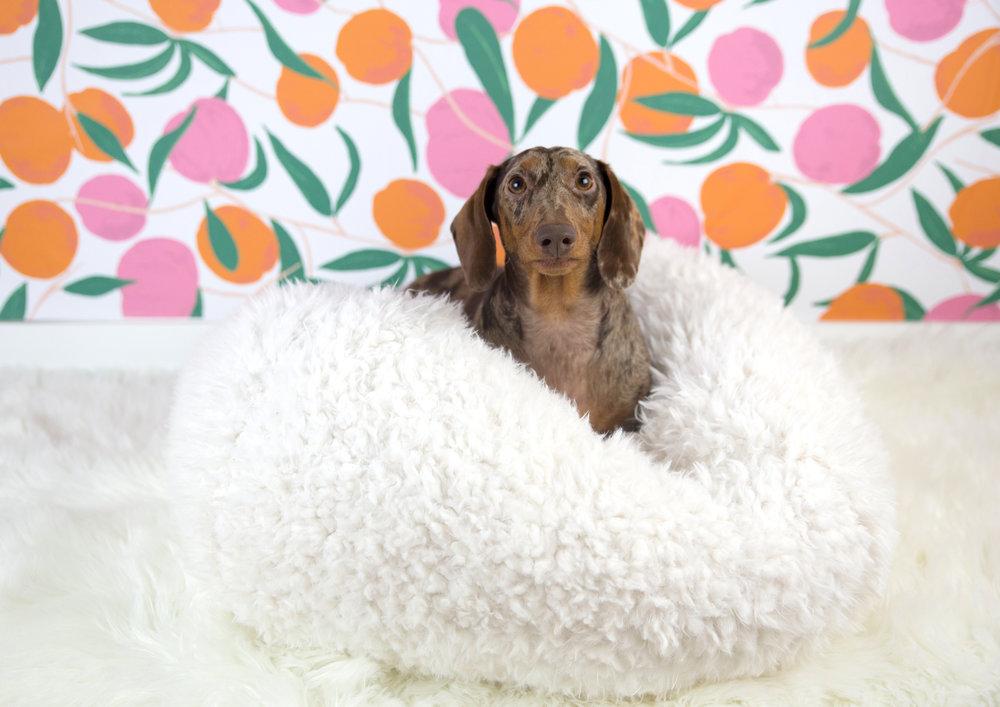 The Dapple Modernbeast Dog Bed