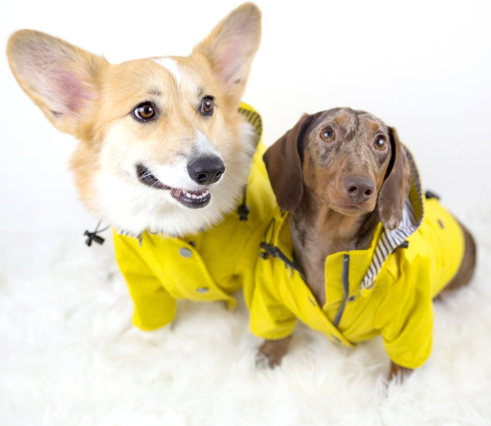 Dave and Lizzie wear raincoats from Ellie Dog Wear
