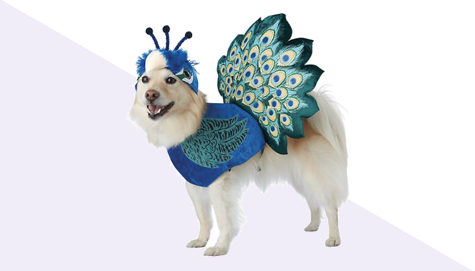 Peacock Dog Halloween Costume from Chewy