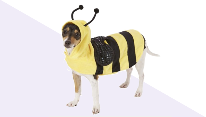 Bumble Bee Dog Halloween Costume from Chewy