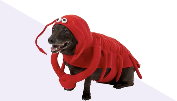 Lobster Dog Halloween Costume from Chewy
