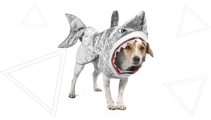 Shark Halloween Costume from PetSmart