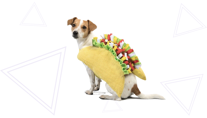 Taco Dog Halloween Costume from PetSmart