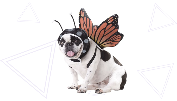 Monarch Butterfly Dog Halloween Costume from Chewy