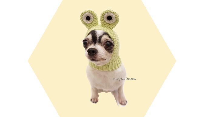 Frog Dog Costume from MyKnitt Handmade Dog Clothes