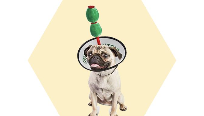 Martini Dog Costume from Petco