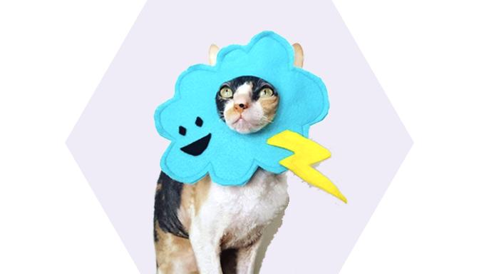 Thunderstorm Pet Halloween Costume from Ticketybootique