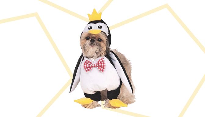 Penguin Dog Halloween Costume from Amazon