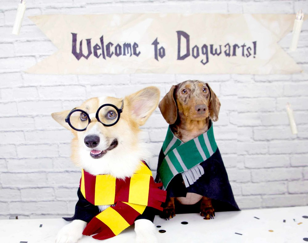 Harry Potter Birthday Party For Dogs On The Dapple Dog Lifestyle Blog