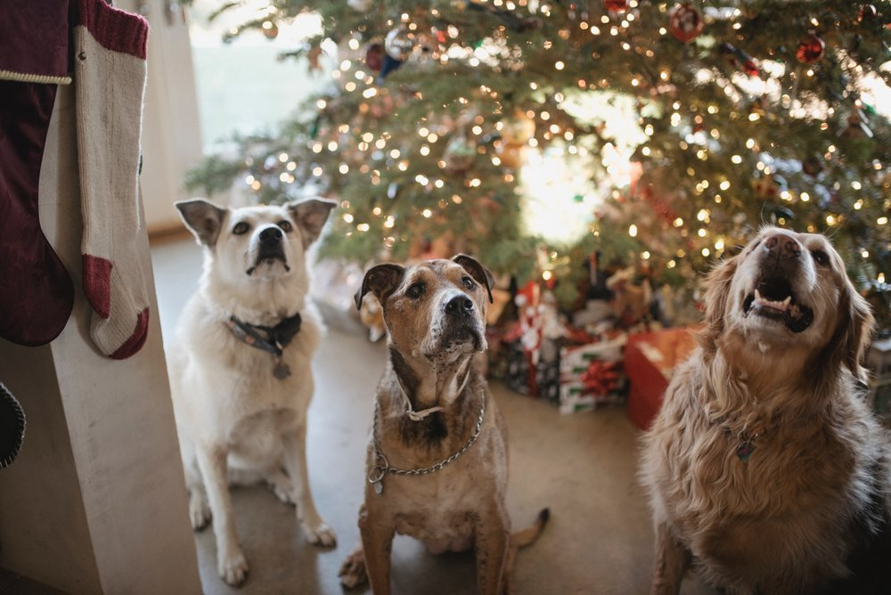 Trader Joes Advent Calendars for Dogs