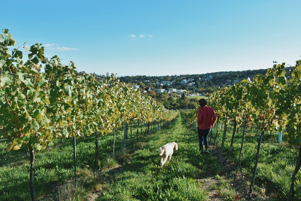 Keeler Vineyard Estate Puppies and Pinot Membership on The Dapple Dog Lifestyle Blog