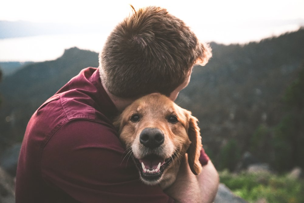 #TogetherWeCanLickCancer Campaign on The Dapple Dog Lifestyle Blog