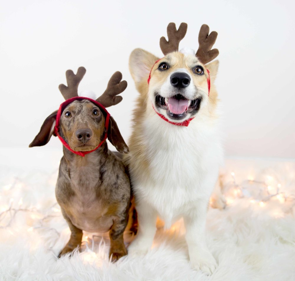 Festive vibes! Antlers via  Buster's Party Shop .