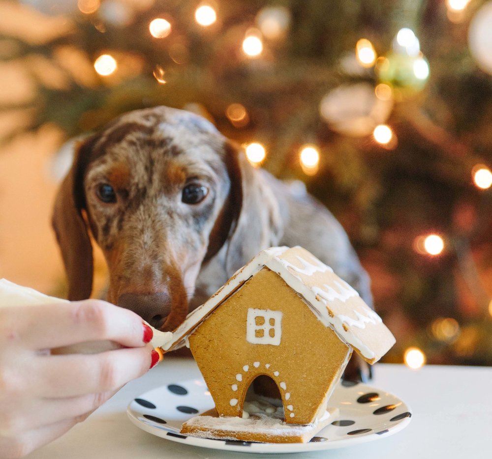 Spotted Dog Bakery Gingerbread House on The Dapple Dog Lifestyle Blog