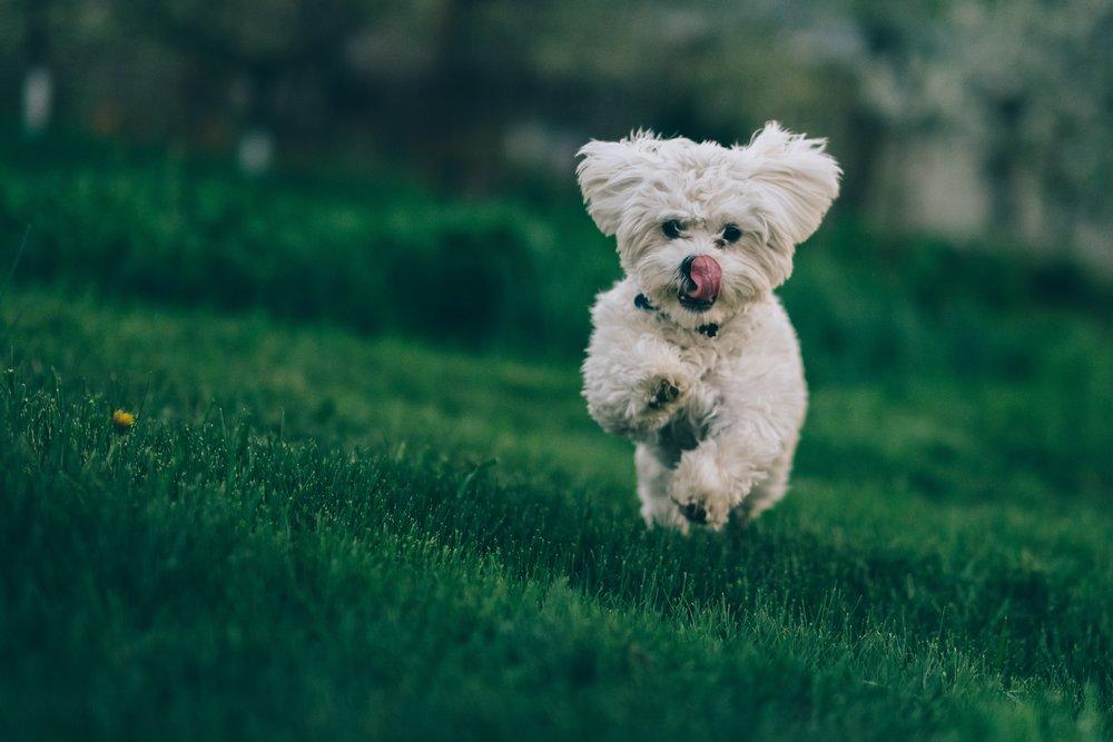 Dog Names on Rover.com on The Dapple