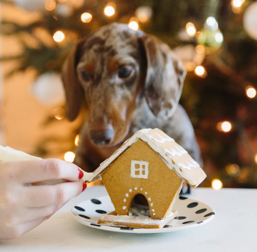 Dog Gingerbread House on The Dapple