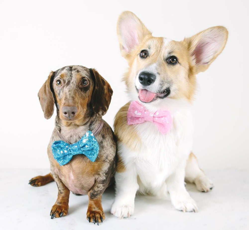 Dave and Lizzie in bow ties from Buster's Party Shop
