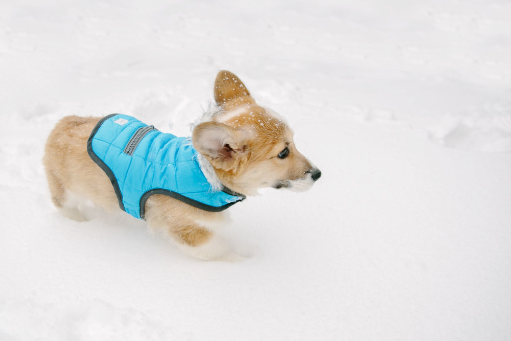 A little #FBF to puppy snow days last January 😍