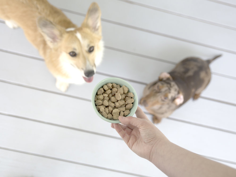 Review of Stella & Chewy's Lil Bites Small Dog Food on The Dapple