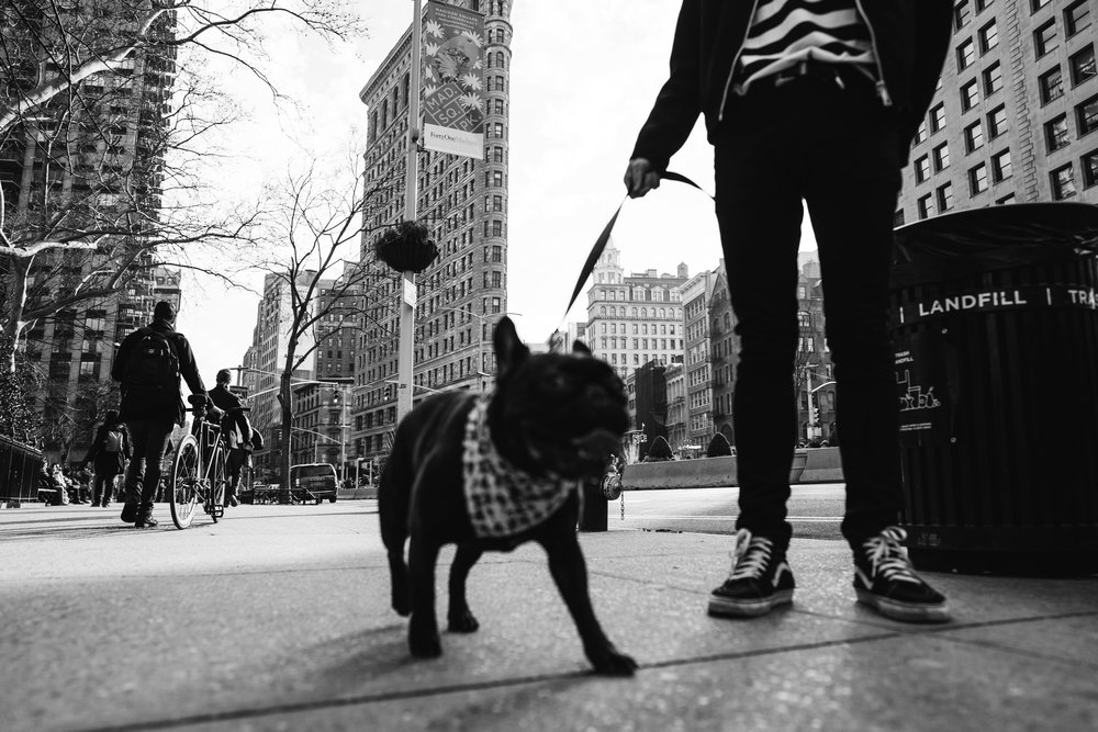 newyork-sony-102789.jpg