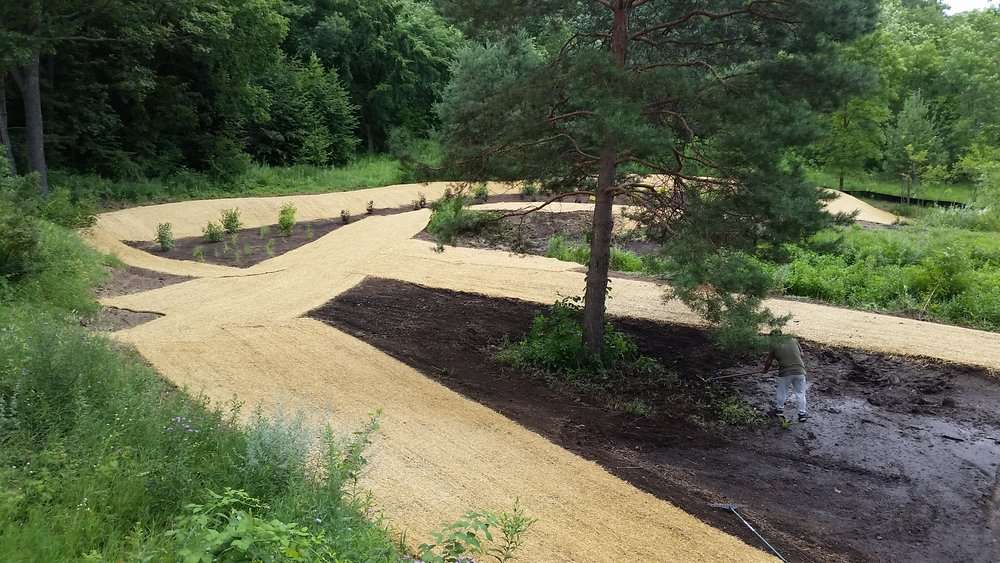 On this project, we seeded natives into these berms on the edges of ponds designed to hold and filter water before it runs into the lake.