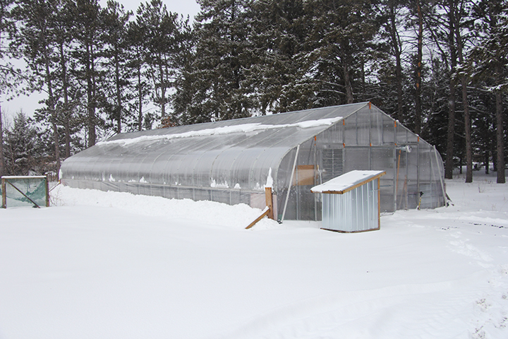 One of the challenges of growing plants in a greenhouse in Central Minnesota is how to deal with snow. If this were a hoop house, meaning a greenhouse with just a plastic sheet cover, we would have to be running the heater so that the snow would melt and run off. Without the heat on, the snow might accumulate and collapse the roof of a hoop house.  Because this is a polycarbonate greenhouse, it can withstand a lot of snow before it would collapse, which means we don't have to run the heater. Polycarbonate is a thick plastic material, much like plexiglass, but has channels that run through it like corrugated cardboard. These channels give it strength and add insulation value.  I took this photo on Sunday, April 15, during a break in the 3-day snow storm. The temperature outside was around 32 degrees. But even though there was dense cloud cover, the temperature in the greenhouse was about 50 degrees, even without running a heater. Those temps inside the greenhouse had the effect of melting the snow that accumulated on the roof.