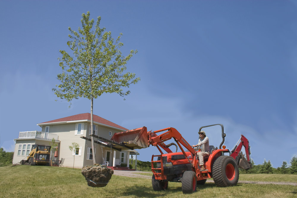 Here's a photo taken years ago of a balled and burlapped tree that we are about to plant in the yard of the house behind. Our tree spade, which allows us to ball and burlap, allows us to dig up the trees before they become active, and then plant them throughout the rest of the spring, summer, and fall.