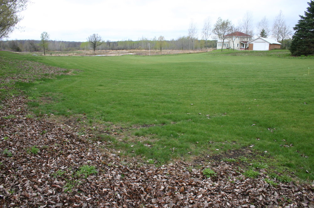 Here is a photo taken the following spring, probably after I fertilized it, which I did only once (the fescue does well on its own in time, and does not need fertilizing in the long term).