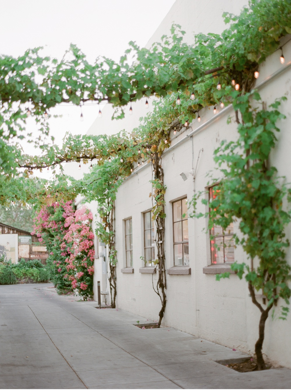 California_NapaValley_Wedding_Photographer©MadalinaSheldon_0100.jpg