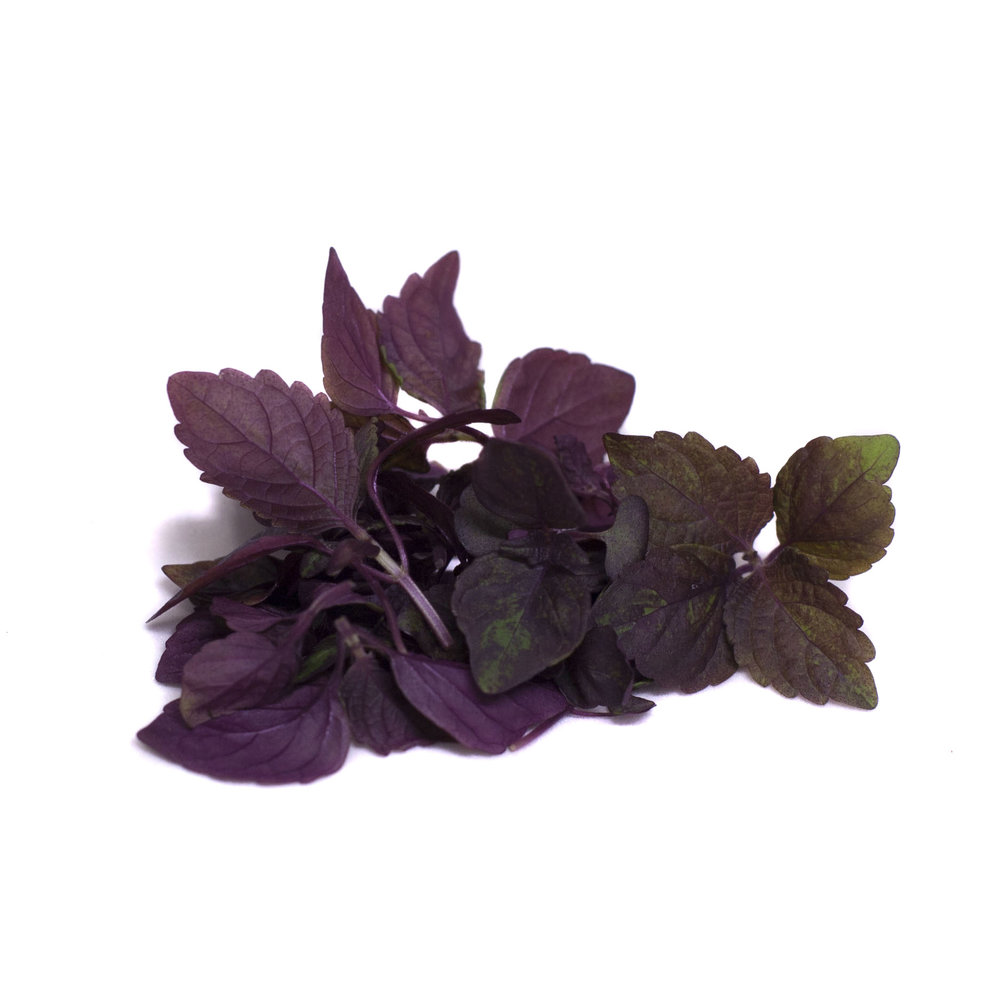Shiso Rouge