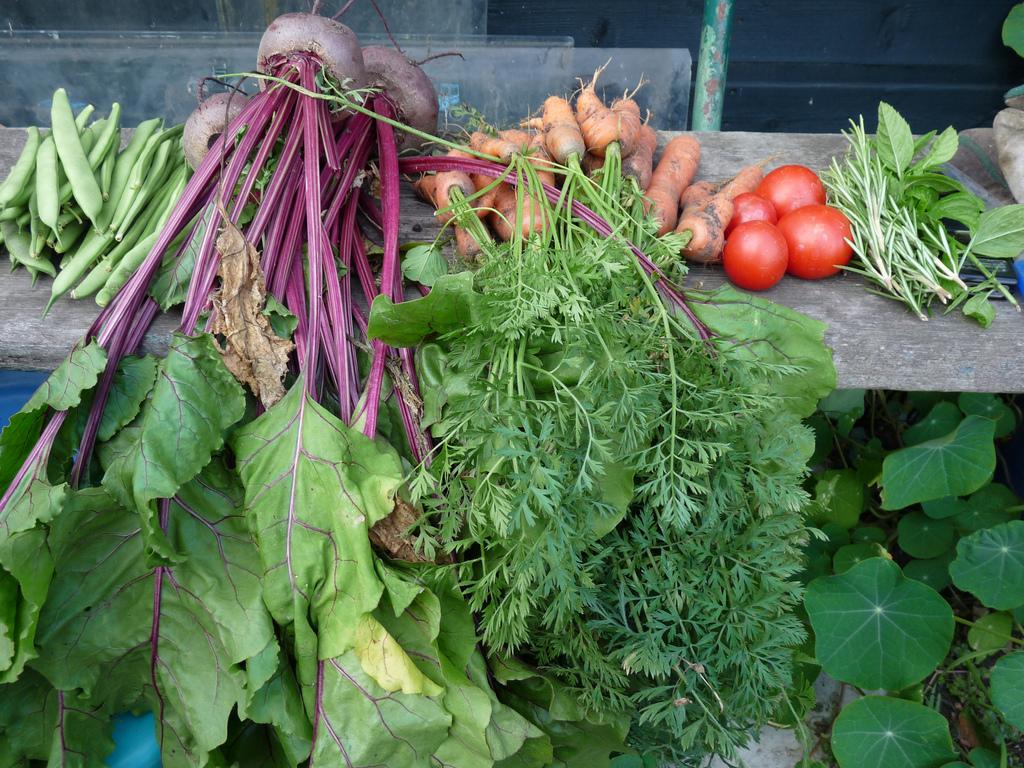 Kitchen Garden Harvest Workshop Transition Stirling