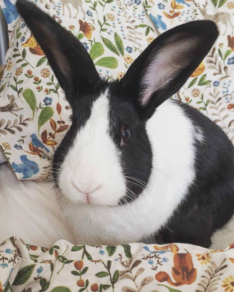 In Memoriam of Peter Rabbit - Original Mascot, Destroyer of everyting, Star of Rabbit Heart and the best bunny ever.Gone but not forgotten