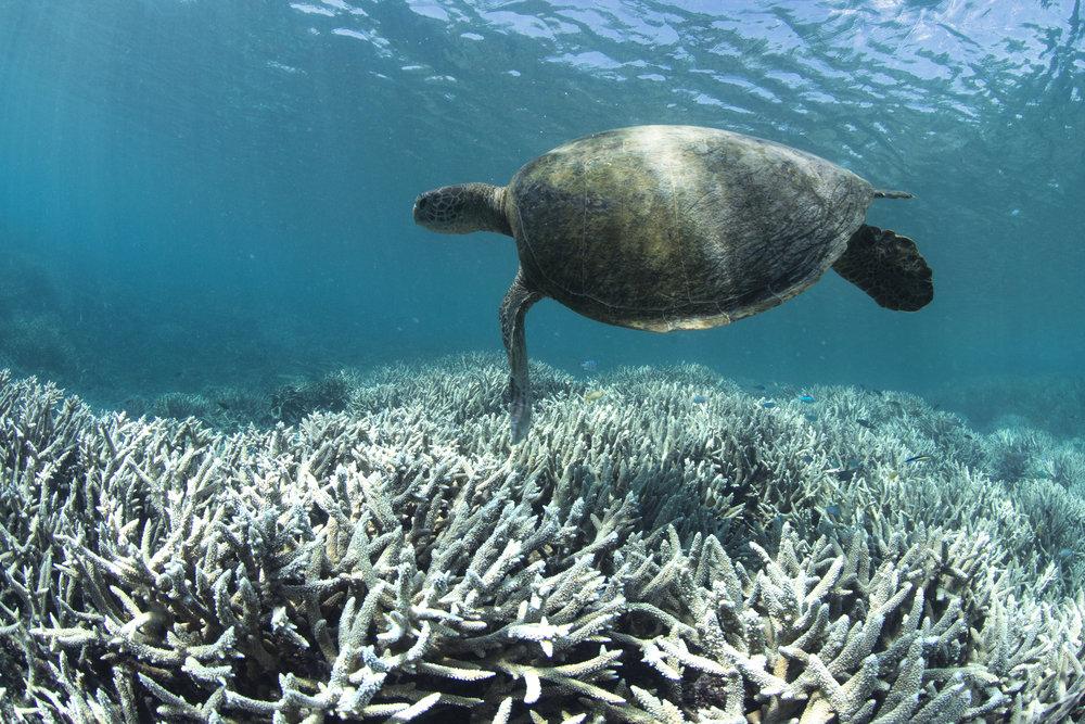 50 Reefs Bleached Image 04.jpeg
