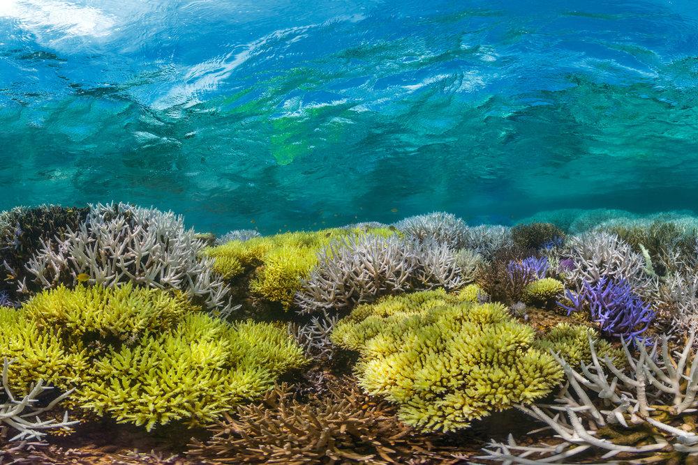 04 Coral bleaching in New Caledonia.jpg