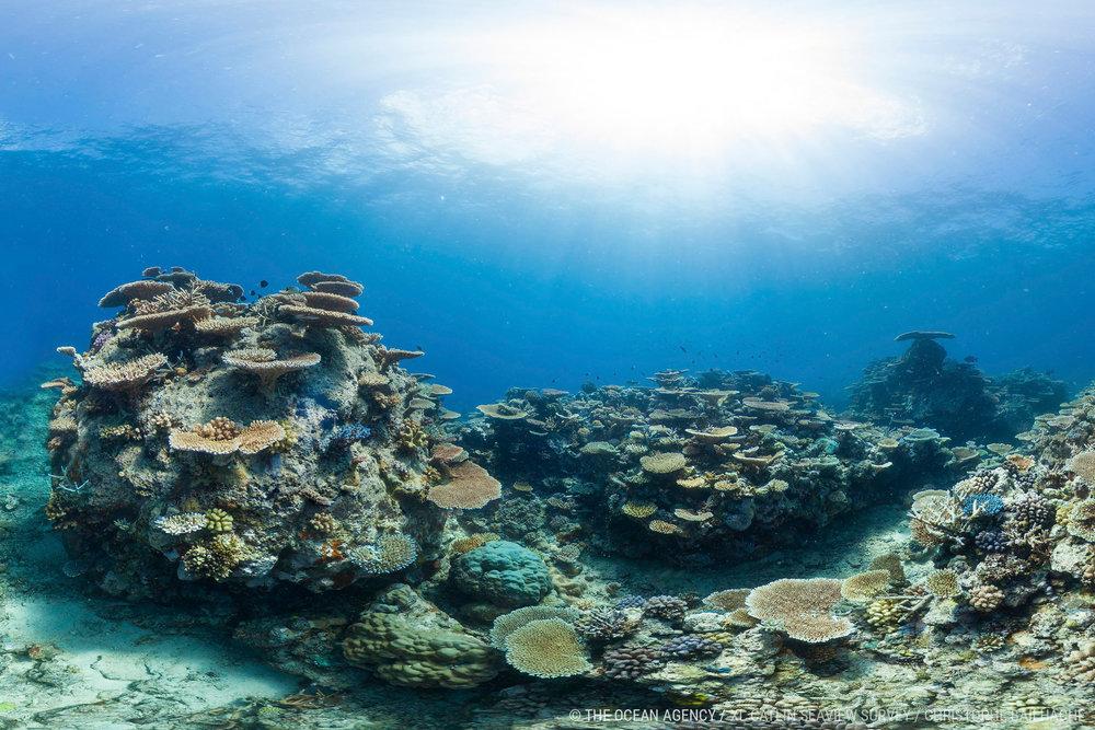 007-CB-Australia-Wilson-Reef-GBR.jpg