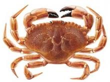Crab, Jonah