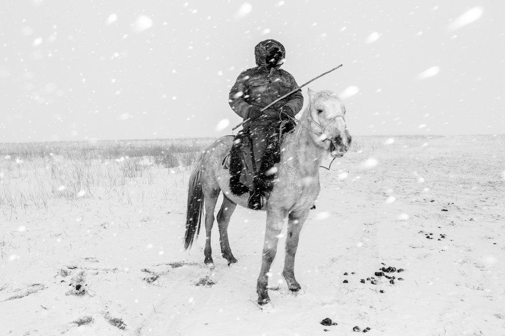 Horse Head #6 - Foto geprint op Fine Art Pearl Baryta (Satin) 285gsm Papier - 40 x 60 cm - 60 x 90 cm - 90 x 135 cm