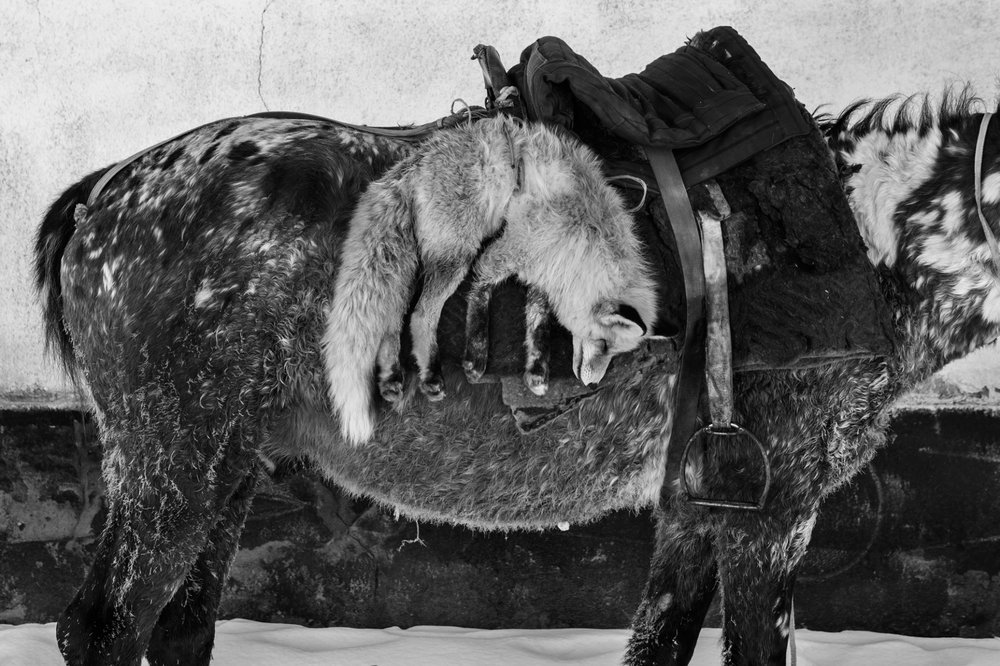 Horse Head #8 - Foto geprint op Fine Art Pearl Baryta (Satin) 285gsm Papier - 40 x 60 cm - 60 x 90 cm - 90 x 135 cm