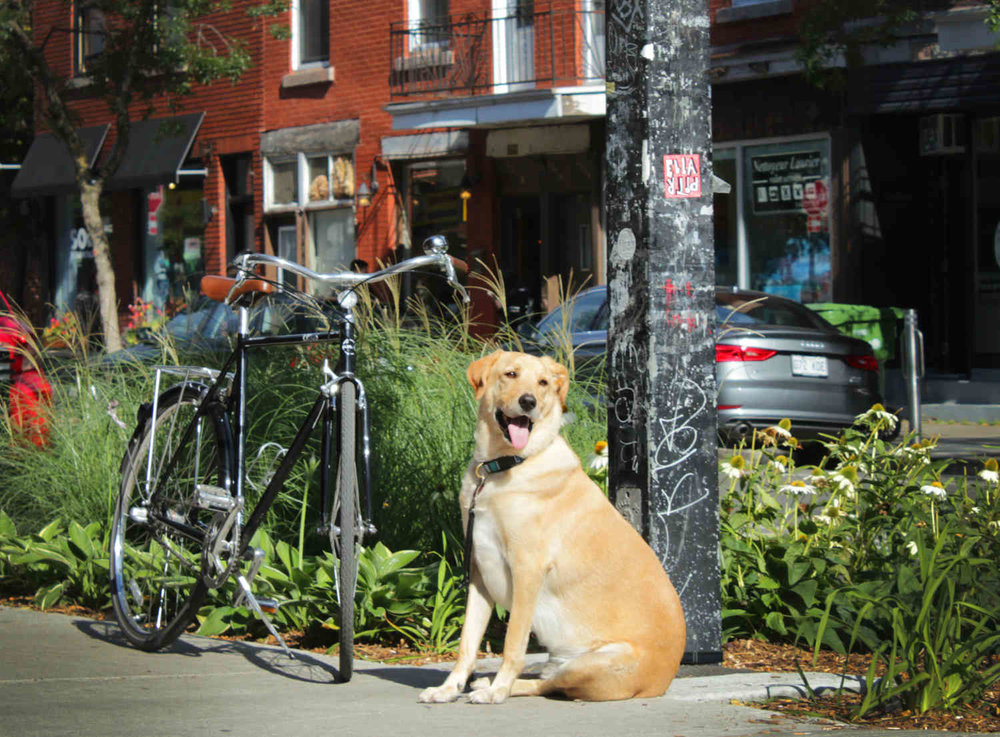 St. Viateur St Montreal bike ride