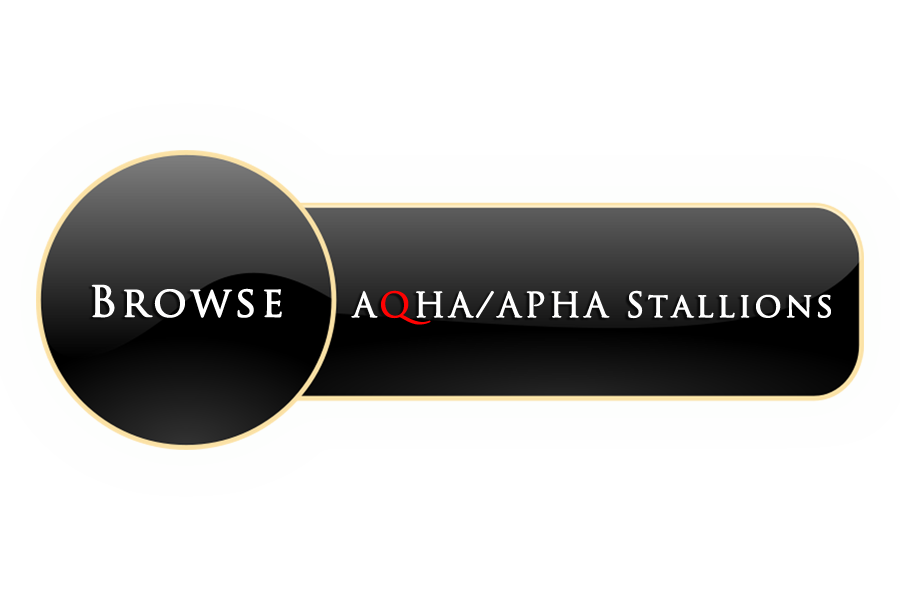 aqhaaphastallions button.png