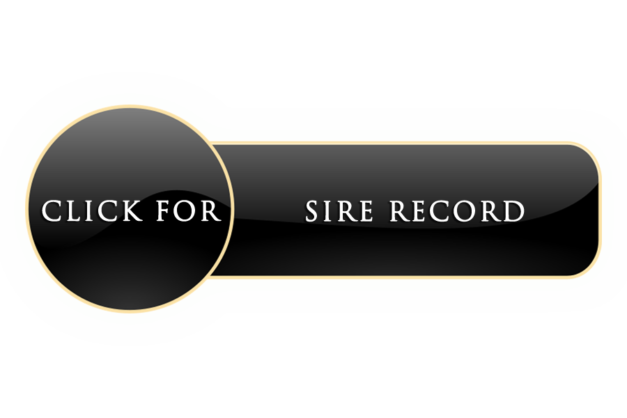 SIRE RECORD BUTTON.png