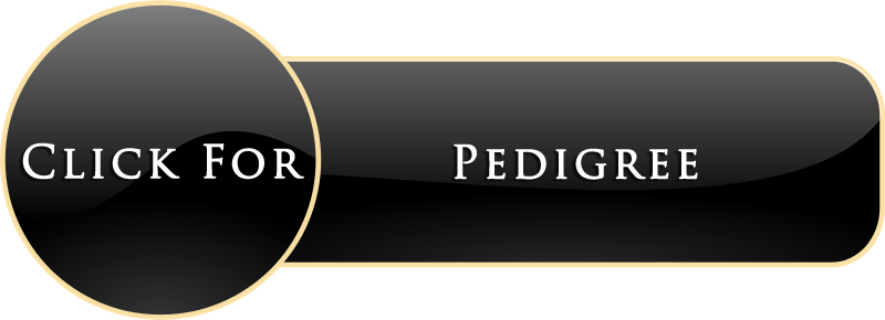 PEDIGREE BUTTON.png