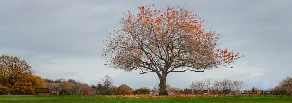 Wild Cherry - November 20th. Benjamin Rice.