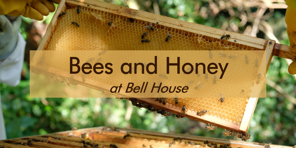 Bees and Honey at Bell House.png