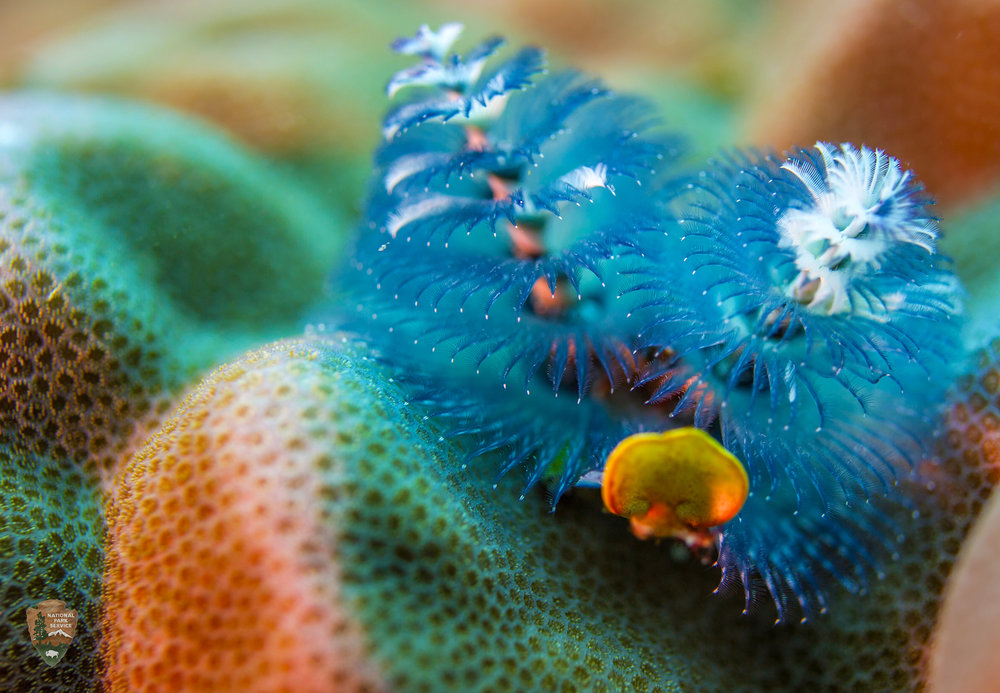 Coral Life - National Park Service of American Samoa.jpg