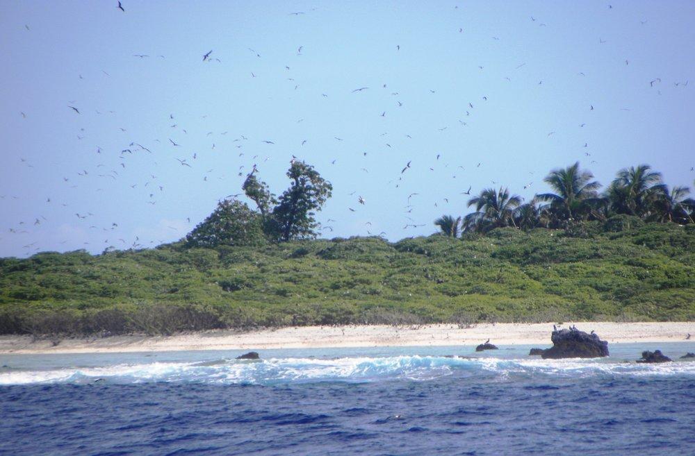 Rose Atoll MNM Trip-March 26-28, 2011 - Nika.jpg