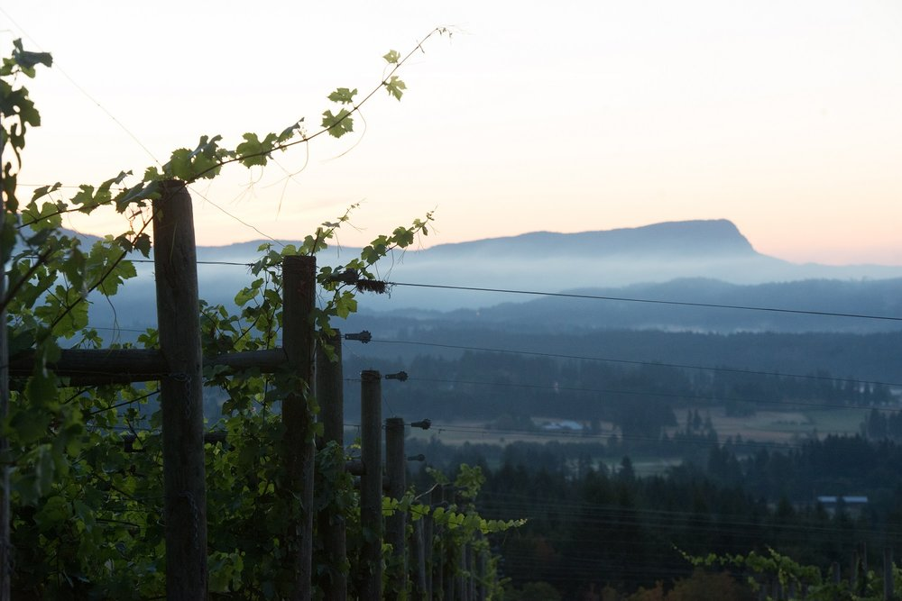 Dawn at Averill Creek Vineyard