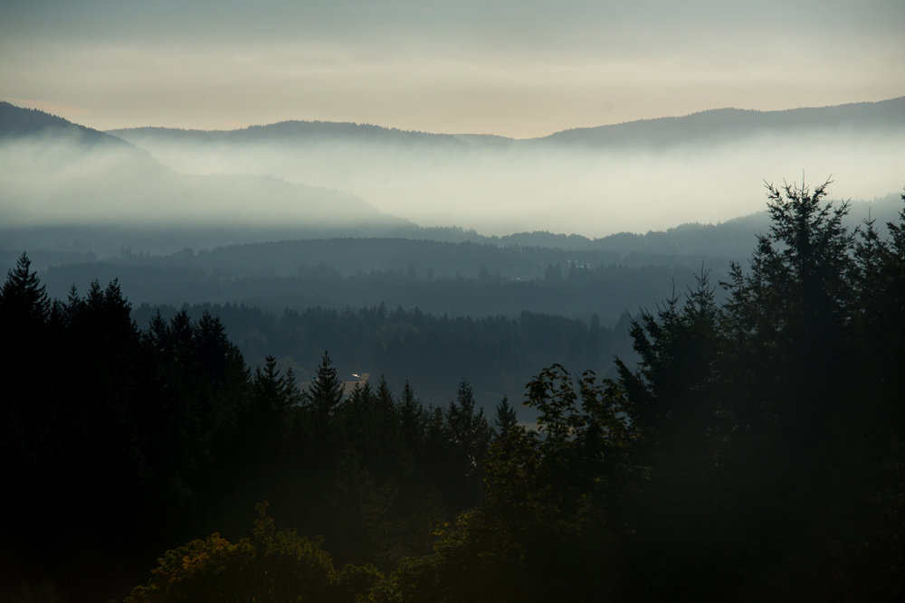 Mist over the Cowichan Valley