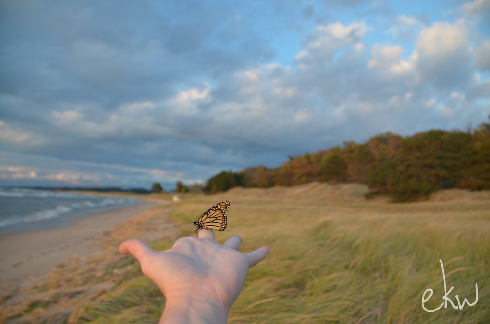 "I love making new friends. This little ""Mariposa"" (butterfly) hitched a ride with me on the beach one day. We had a rather nice time!"