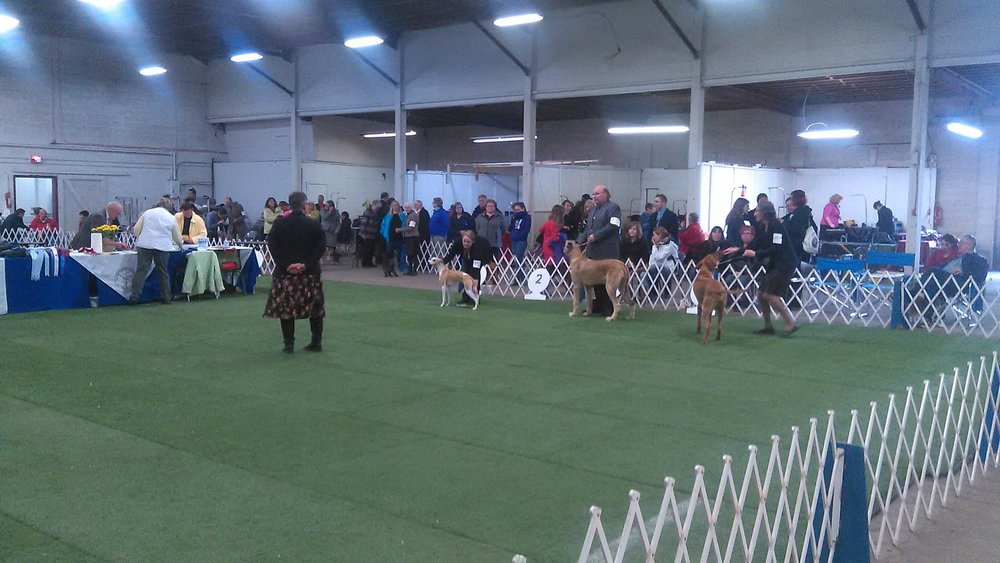 COBEQUID DOG SHOW 2015.jpg